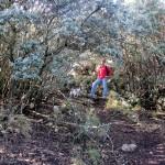 Bosc Carrasques